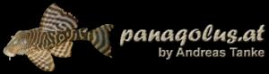 Panaqolus.at